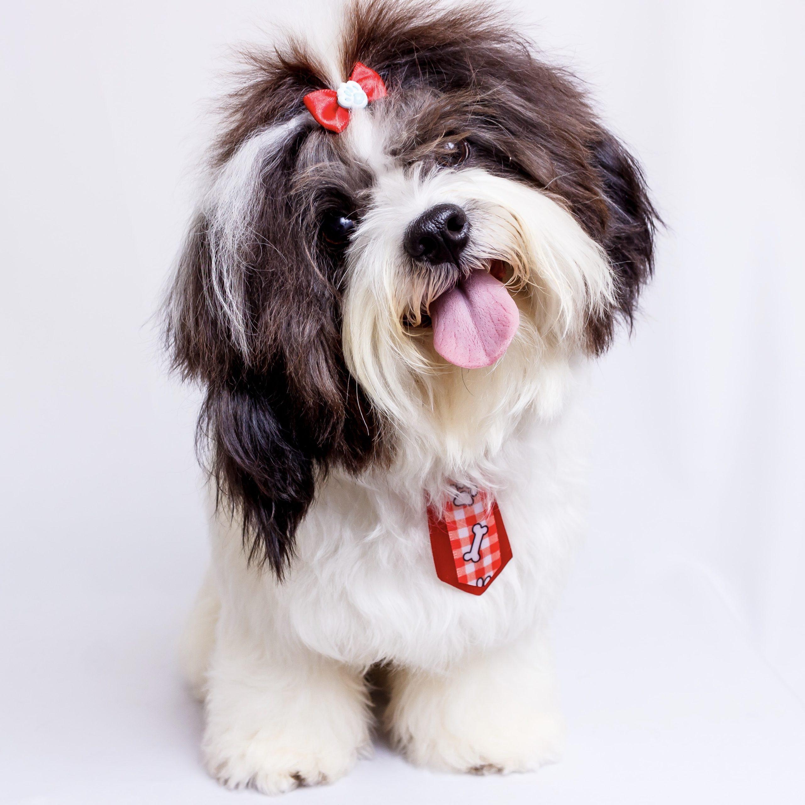Hundeutstilling, forståelse og pelsstell