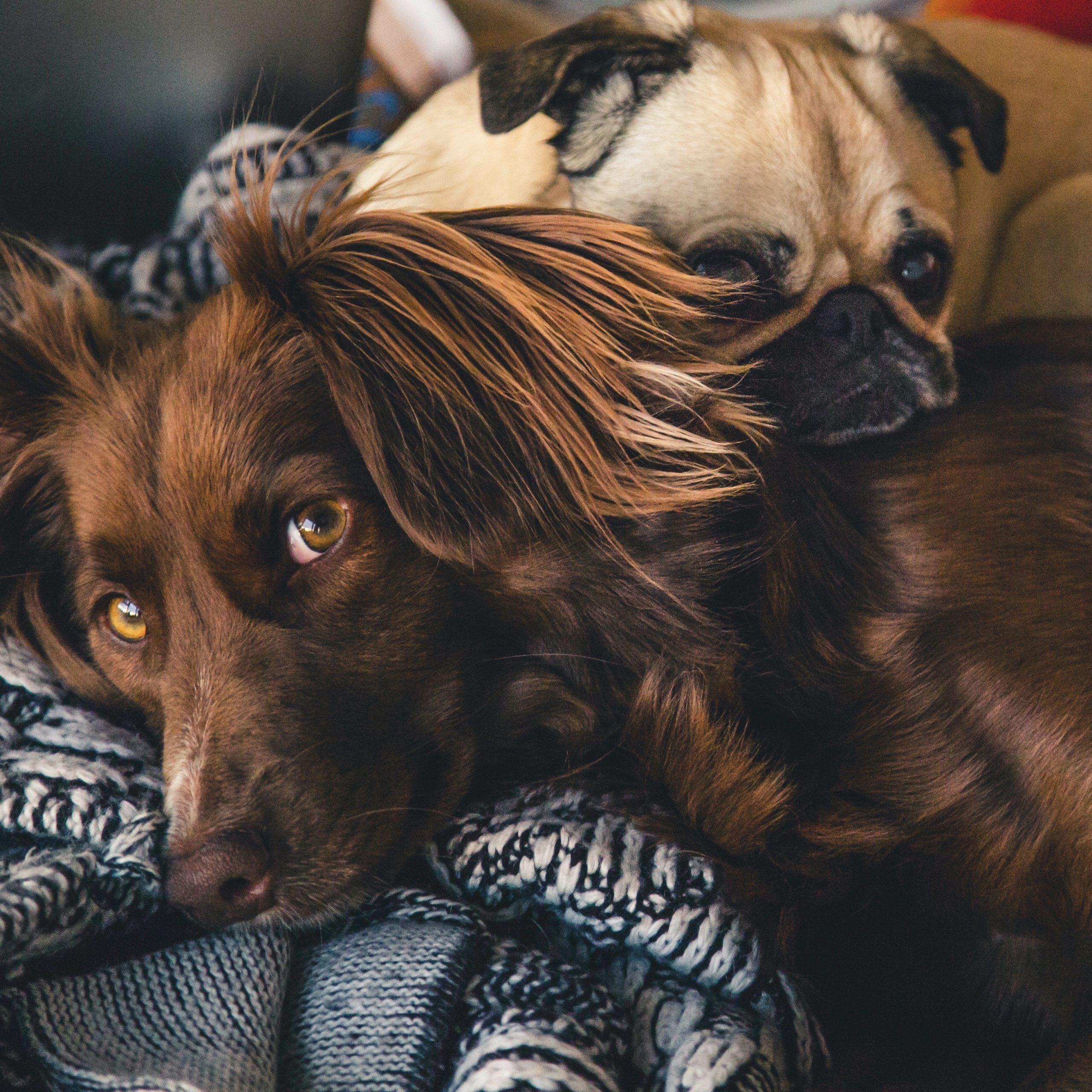 Etologi, atferd og hundens forståelse