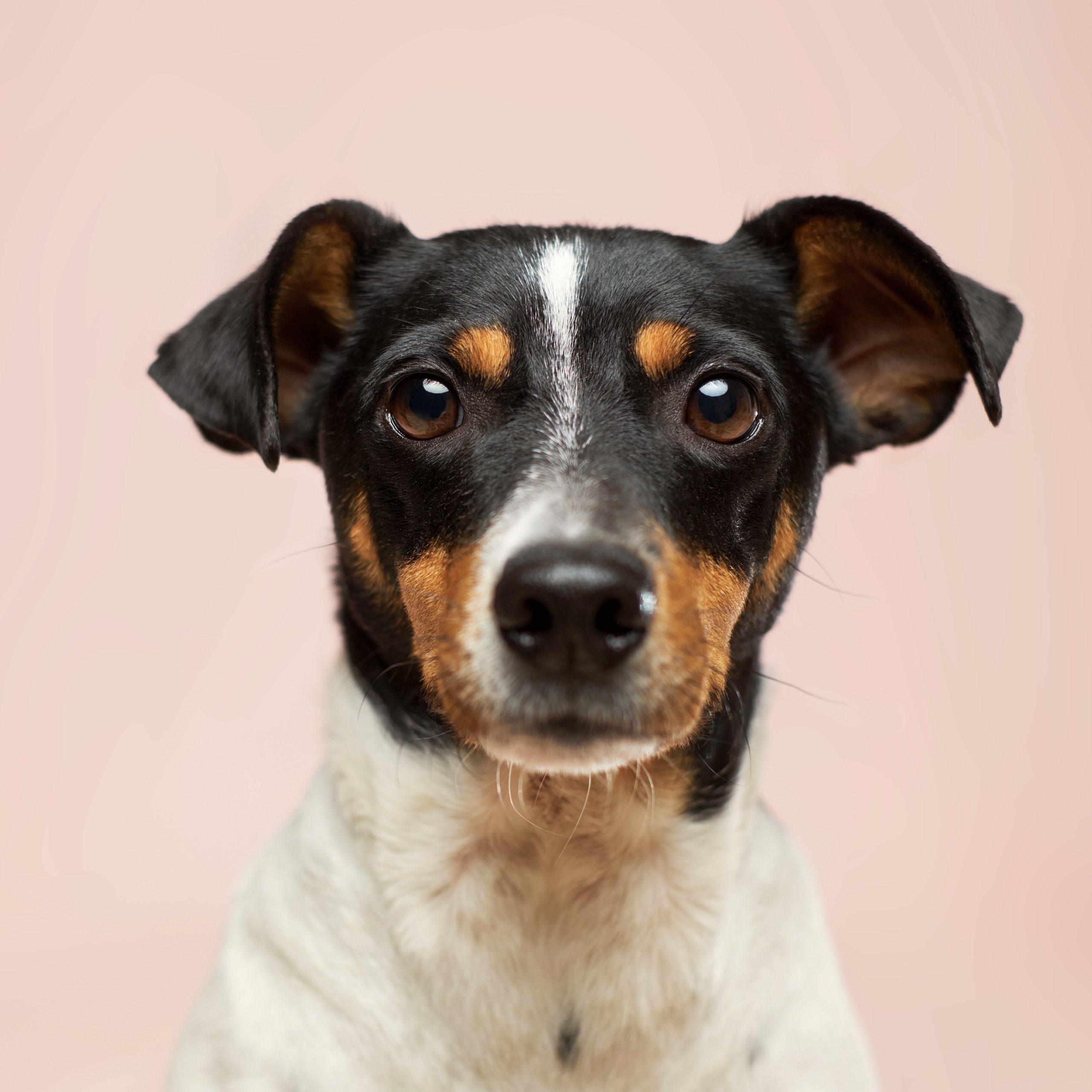 Anatomi, sykdomslære og førstehjelp på hund